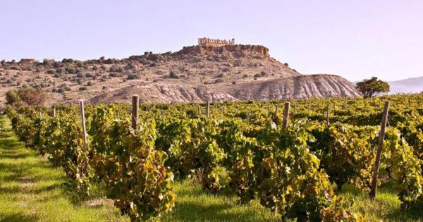 Sicilia prima per risorse vitivinicoltura