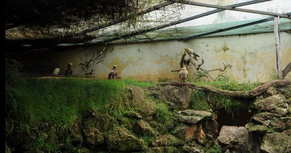 VILLA D'ORLEANS - Cova eccezionale di avvoltoi, lavori sospesi