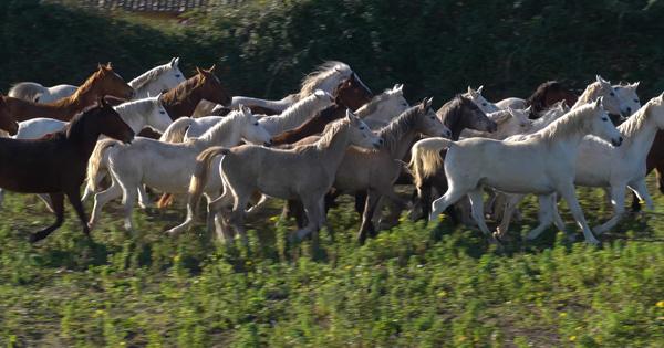 AMBELIA - Fiera del cavallo, giovedì si presenta il programma