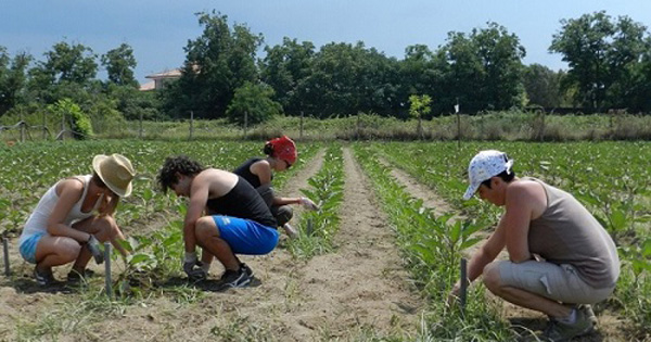 PSR 2014-2020 - Giovani agricoltori, ok a graduatoria