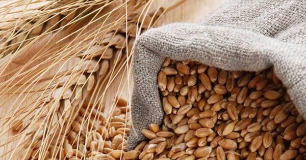AGRICOLTURA - Una norma per valorizzare e tutelare il grano siciliano