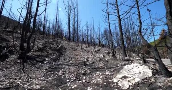 INCENDI - Cinque mln per ripristinare i boschi danneggiati