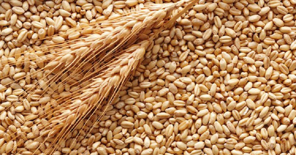 AGROALIMENTARE - Pozzallo, controlli su nave con grano dal Canada