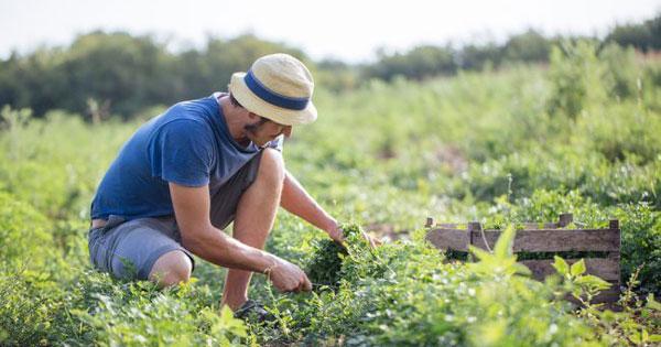 Agricoltura, per le aree interne dell'Isola arrivano trenta milioni