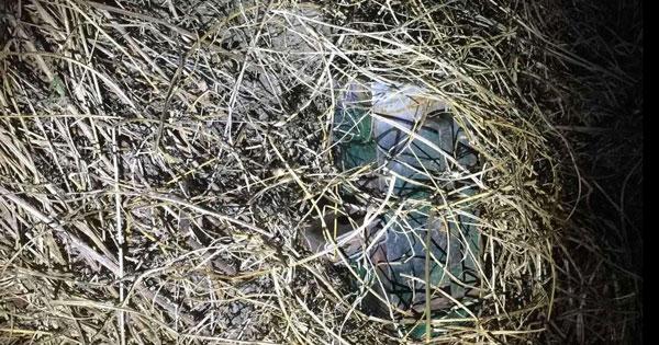 CORPO FORESTALE - Caccia, operazione antibracconaggio a Trapani