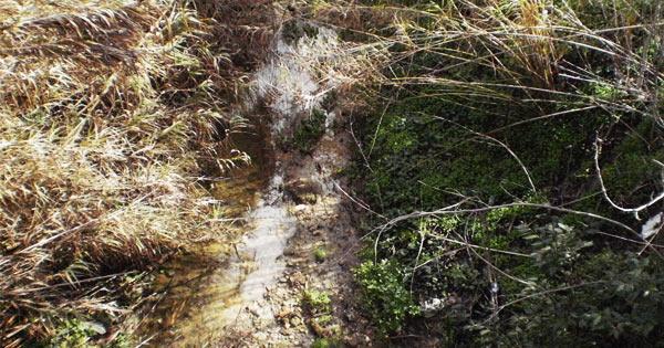 VALLELUNGA PRATAMENO - Un progetto per il torrente Salacio