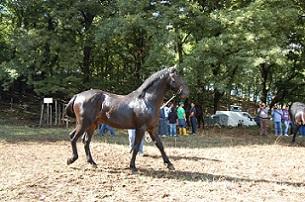 foto cavallo san fratello 1