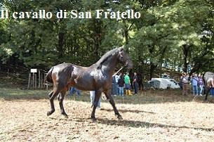 CAVALLO SAN FRATELLO