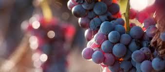 Festa dell'Uva da Tavola a Licodia Eubea