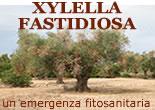 XYLELLA FASTIDIOSA un emergenza fitosanitaria