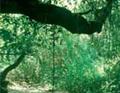 video - Sicilia Natura